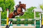 saut d'obstacle équitation